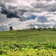 African countryside landscape, rainy season — Stock Photo