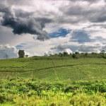 African countryside landscape, rainy season — Stock Photo #28215321