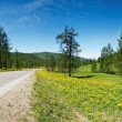 Landscape with forest, road and blue sky — Stock Photo