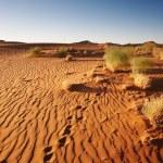 Namib Desert. Sossusvlei, Namibia. — Stock Photo