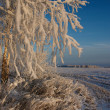 Frosty tree — Stock Photo #28215601