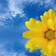 Yellow flower reflected in water — Stock Photo