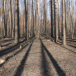Stock Photo: Burnt forest