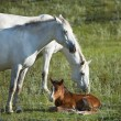 New-born foal and two horses — Stock Photo