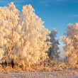 Winter landscape with frosty forest and blue sky — Stock Photo #28216225