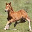 Funny foal — Stock Photo