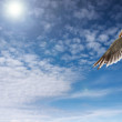 Blue sky and flaying seagull — Stock Photo