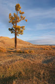Mongolian landscape — Stock Photo