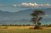 African savanna and Rwenzori Mountains, Queen Elizabeth N.P., Uganda — Stock Photo