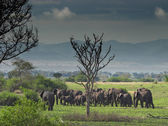Troop of elephants in african savanna — Stock Photo