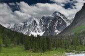 Landskap med skog och snowy mountains — Stockfoto