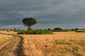 African savanna, Queen Elizabeth National Park, Uganda — Stock Photo