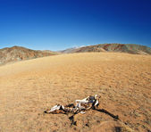 Lifeless desert and dead horse — Stock Photo