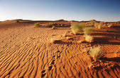 Namib Desert. Sossusvlei, Namibia. — Stock Photo