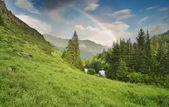 Rainbow over forest — Stockfoto