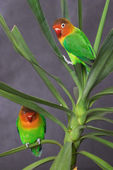 Parrots on a twig — Stock Photo