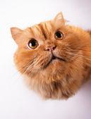 Cat looking into camera — Stock Photo