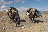 Mongolian nomads — Stock Photo