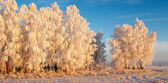Winter landscape with frosty forest and blue sky — Stock Photo