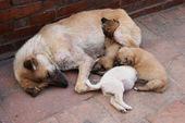 Stray dogs — Stock Photo