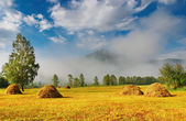 Landscape with hayfield — Stock Photo