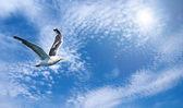 голубое небо и flaying чайка — Стоковое фото