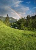 彩虹在森林 — 图库照片