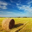 Stock Photo: Mown field