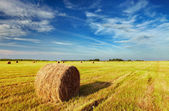 Mown field — Stock Photo