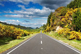 Landscape with road and forest — Stock Photo
