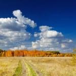 Golden autumn — Stock Photo #36187359