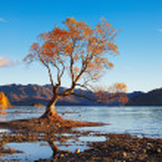 Lake Wanaka, New Zealand — Stock Photo #46246945
