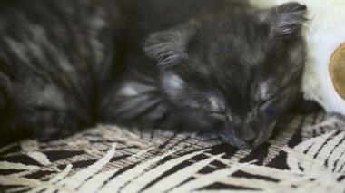 Gatito durmiendo. — Vídeo de Stock