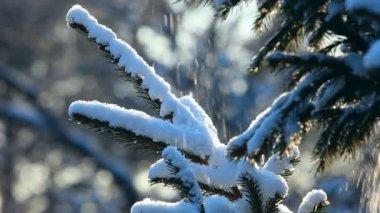 Zimní les. — Stock video