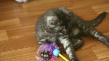 Playful kitten. — Stock Video