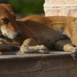 Stray dog — Stock Video #20188591