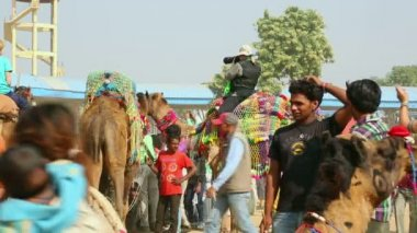 Pushkar Camel fair — Stock Video