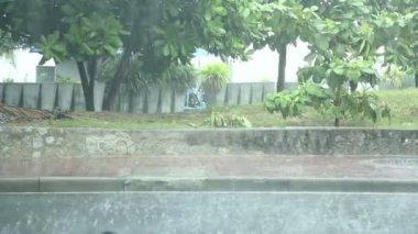 热带雨 — 图库视频影像