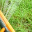 Stock Video: Watering lawn