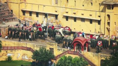 Elefant taxi — Stockvideo