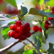 Wild berries — Video Stock