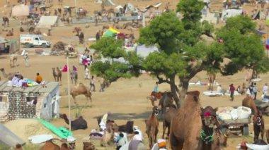 Pushkar camel fair. — Vídeo de Stock