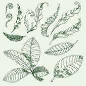 Café y helecho de hojas — Vector de stock