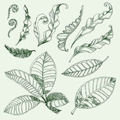 Coffee and fern leafs — Vector de stock