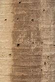 Bark palm — Stock Photo