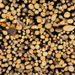 Stack of firewood — Stock Photo #25140991