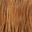 Stock Photo: Brown hair texture