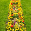Stock Photo: Blossom flowerbed in lawn