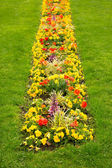 Blossom flowerbed in the lawn — Stock Photo