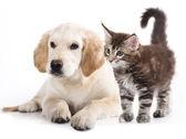 Kot i pies — Zdjęcie stockowe